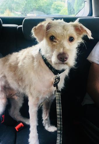 canine allsorts dog rescue